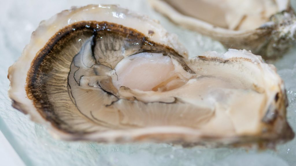 How to Shuck an Oyster Safely